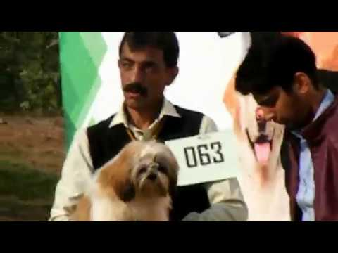 PGSDC Pakistan German Shepherd Dog Club || Ayub Park Sports and Adventure  Rawalpindi || Dog Show