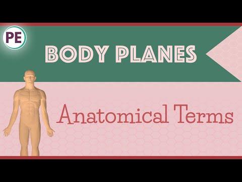 Anatomical Terms: Human Body Planes