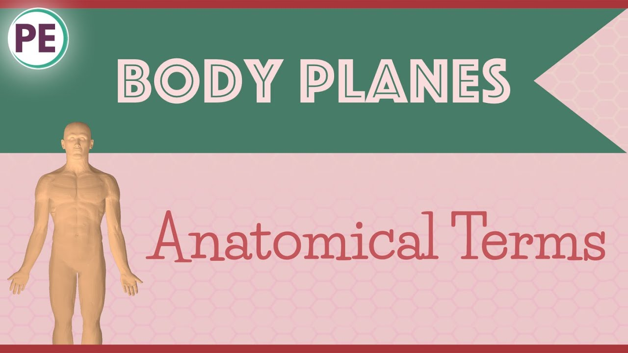 Anatomical Terms: Human Body Planes - YouTube