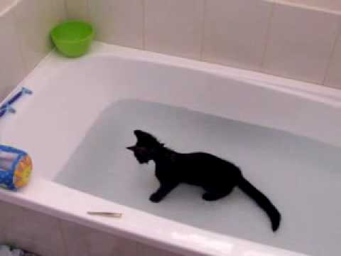 Crazy cat, loves water