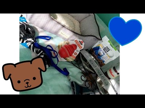 SHOPPING FOR A NEW PUPPY! 8/5/16 |ThePatanogrins