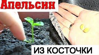 видео Как вырастить дерево из косточки, семян