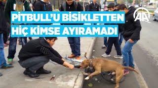 Anadolu Ajansı - Pitbull'u bisikletten hiç kimse ayıramadı