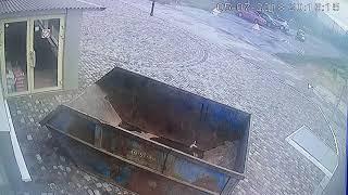 Собак оставили умирать в багажнике в Твери 4