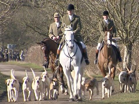 Despite Ban, Fox Hunts Still Thrive In Britain