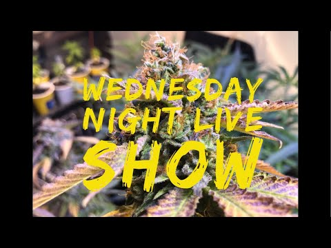WEDNESDAY NIGHT LIVE SHOW - Jeff Session attacking Cannabis, Legal Herb in Cali and much more!
