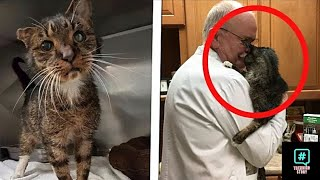 The doctor kissed the cat a minute later something unthinkable happened