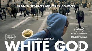 Perro blanco pelicula