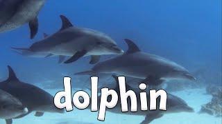 Ocean Animal Sounds