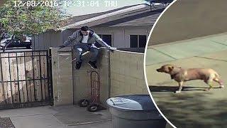 10 Perros VS Intrusos Captados en Cámara