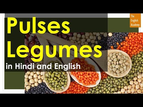 Pulses Names In English and legumes in Hindi - दालों के