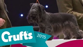Group Judging - Terrier And Winner's Presentation | Crufts 2015
