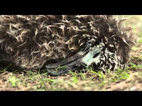 Midway film, Trailer a film by chris jordan mp4