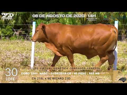 LOTE 30 CORO 2241