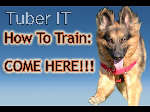 how-to-train-your-dog