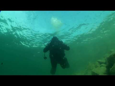 Arctic Live Dive