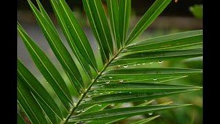 Palm Sunday Worship Video - March 28, 2021