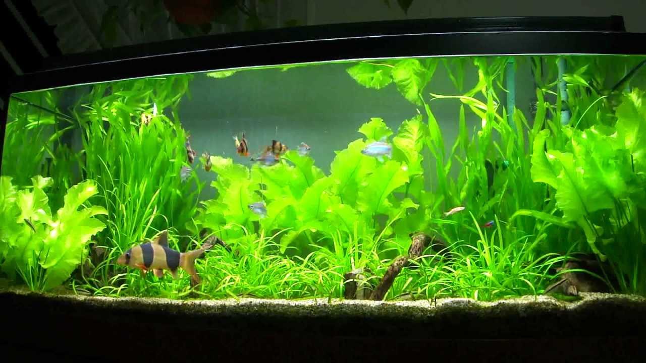4ft fish tank doovi for Fish tank set