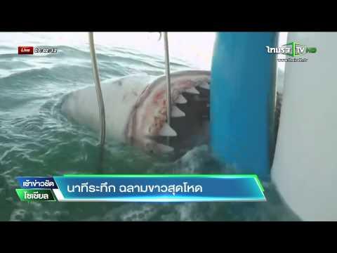 นาทีระทึก ฉลามขาวสุดโหด | 03-07-58 | เช้าข่าวชัดโซเชียล | ThairathTV