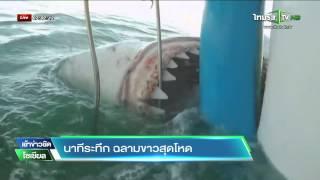นาทีระทึก ฉลามขาวสุดโหด   03-07-58   เช้าข่าวชัดโซเชียล   ThairathTV