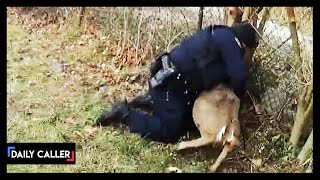 Watch These Officers Save A Tangled Deer