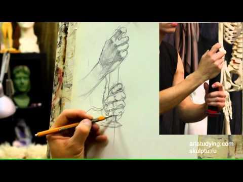 Руки, короткий рисунок, конструктив. Обучение рисунку.Фигура. 55 серия.