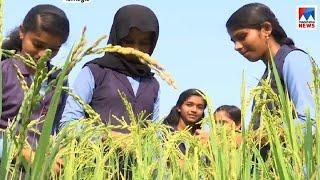 പ്രളയത്തെ അതിജീവിച്ച് വിദ്യാർത്ഥികളുടെ കൃഷി   Paddy farm students