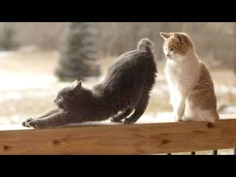 YOU will LAUGH SO HARD that you'll FALL ON YOUR BACK - Funny CAT compilation