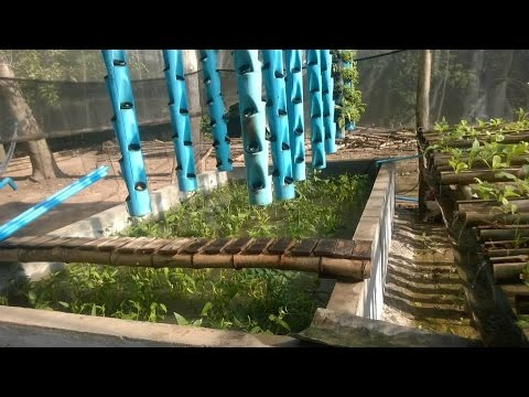 Aquaponics System Cambodia Vertical Flat Bed And Rail
