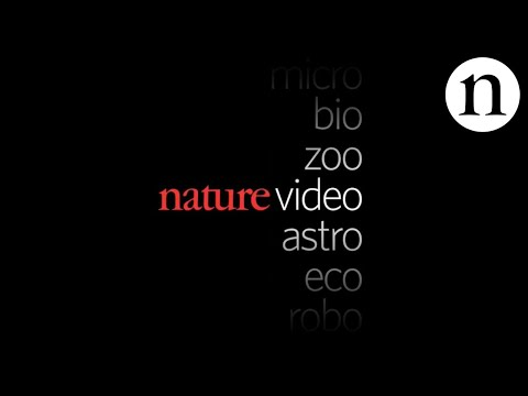 TRAILER: Nature Video