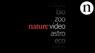 TRAILER: Nature Video thumbnail