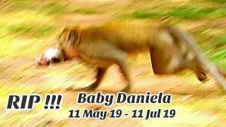 rip-baby-monkey-daniela-was-bitten-by-big-ganster-monkey-until-die