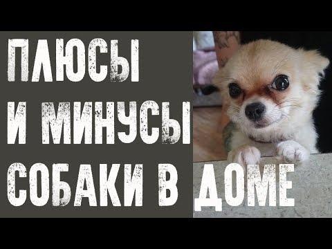 Вопрос: Какие есть плюсы и минусы содержания собаки в доме?