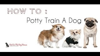 BeforeAndAfterTV  - How to Litter Potty Train a Puppy Dog - BeforeAndAfterTV