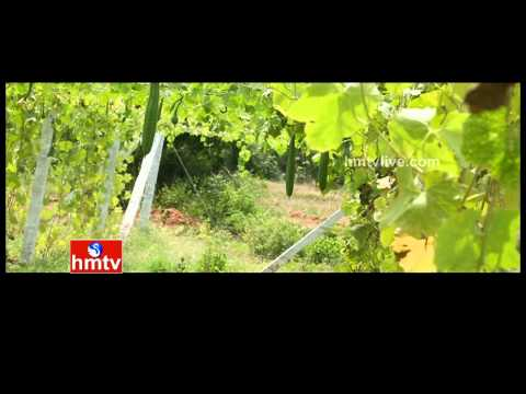 Chemical Free agriculture by Siva Shankar | Nela Talli Weekend Special - 22-08-15 | HMTV