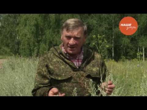 Фильм Полынь – трава горькая (1982) смотреть онлайн