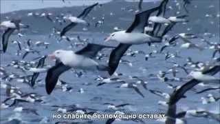 За птиците - Архидякон Роман Тамберг и иерей Алексей