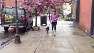 Humane Low Level Remote Collar Dog Training, Used To Modify Human Aggressive Behavior