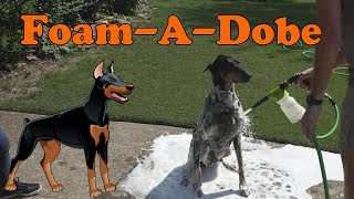 This is how I give my Doberman Pincher a bath with the new Foam-A-Dobe