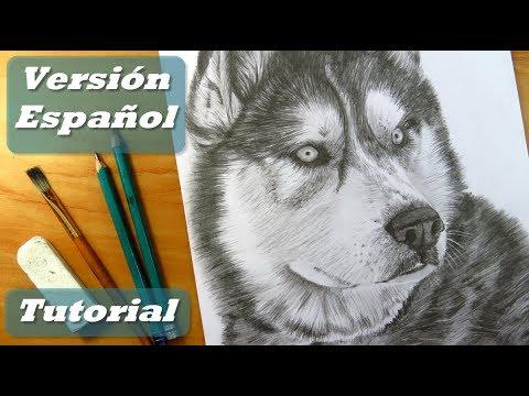 cómo-dibujar-un-perro-|-cómo-dibujar-pelo-de-animal-|-lápices-de-grafito