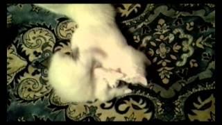 Спец подразделение белые коты