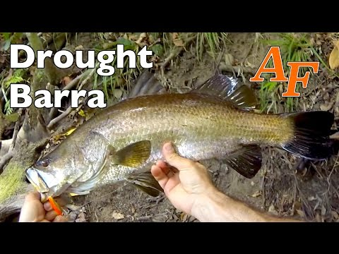 Drought Jungle Fishing Barramundi Andy's Fish Video EP.293