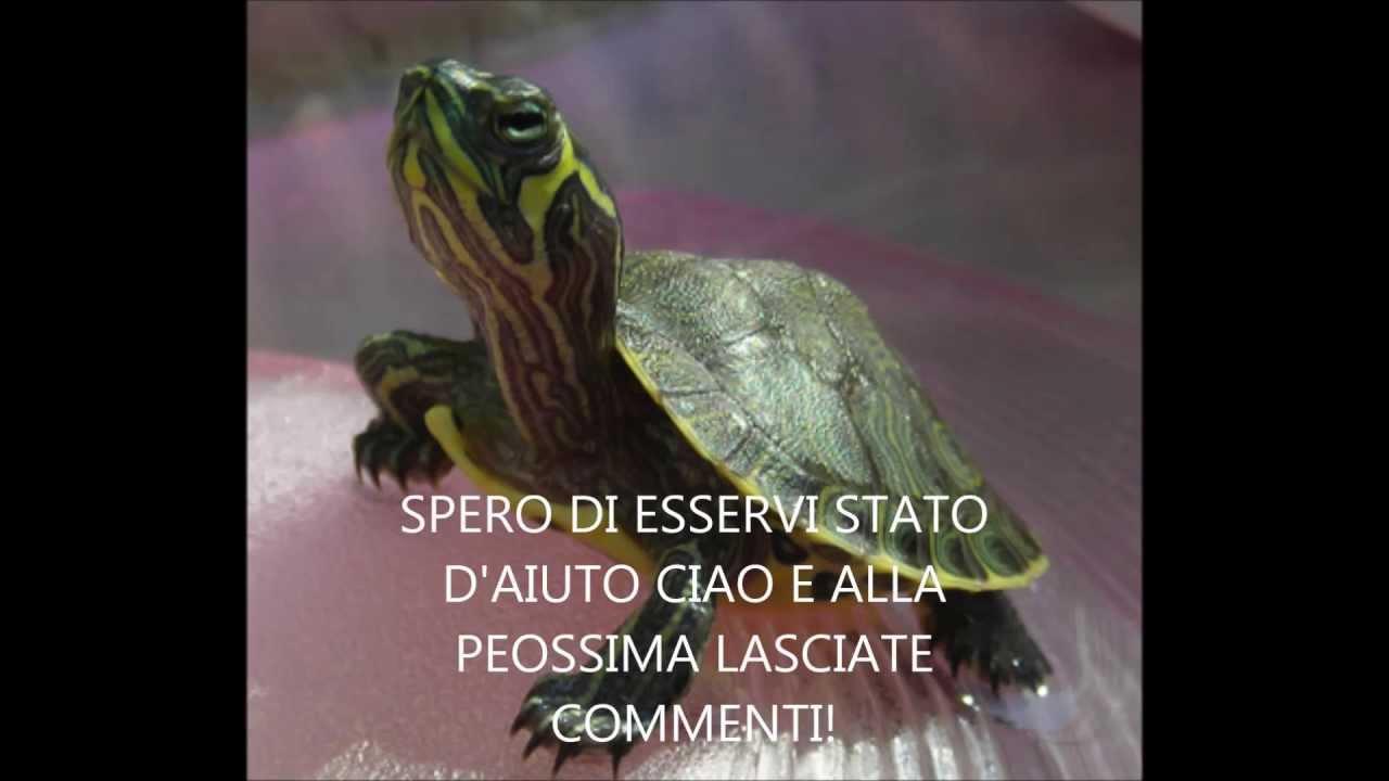 Come prendersi cura di una tartaruga d 39 acqua dolce hd for Acqua tartarughe
