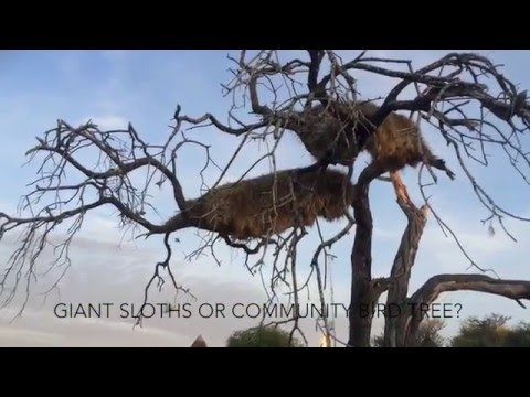 Namibia Road Trip March 2016