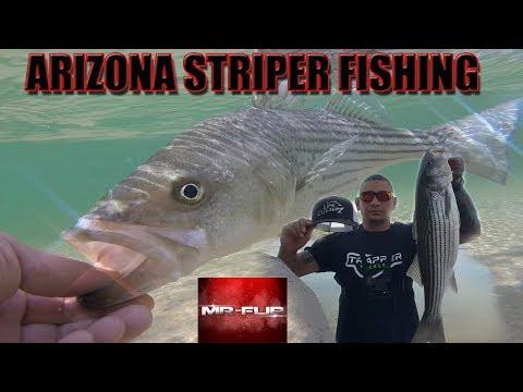 -THE BITE IS ON-  Striper Fishing The Colorado River