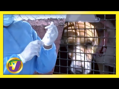 Dogs Migrate to Canada from Jamaica   Vaccine Wasted Audit Announced   Medical Oxygen Shortage
