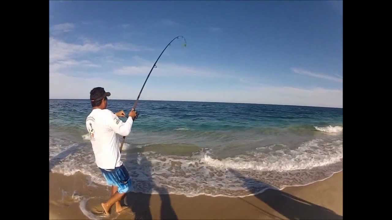 Cabo Surf Fishing Information and Resources for Surf Fishing