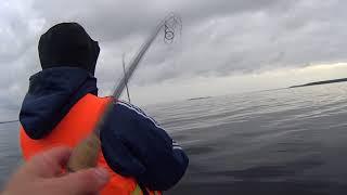 Ловля окуня на Рыбинке 28.09.17
