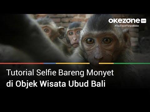 seperti-ini-selfie-bareng-monyet-di-ubud-bali