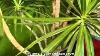 Pasella | Gardening tips | Indoor plants